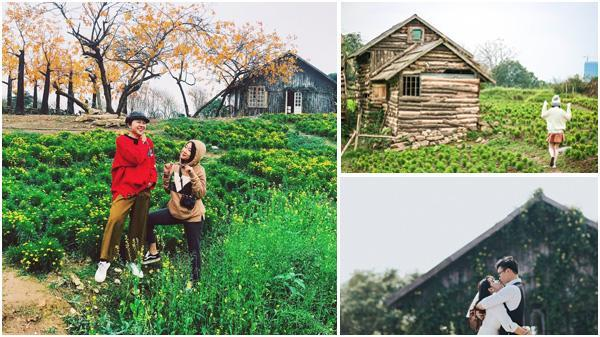 """Giới trẻ """"phát cuồng"""" với Thảo nguyên hoa đẹp lung linh như khu vườn cổ tích ngan gần Hưng Yên"""
