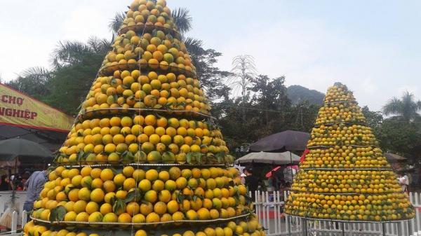 Khai mạc Lễ hội cây ăn quả có múi và Hội chợ nông nghiệp tỉnh Hòa Bình ngày 11/12
