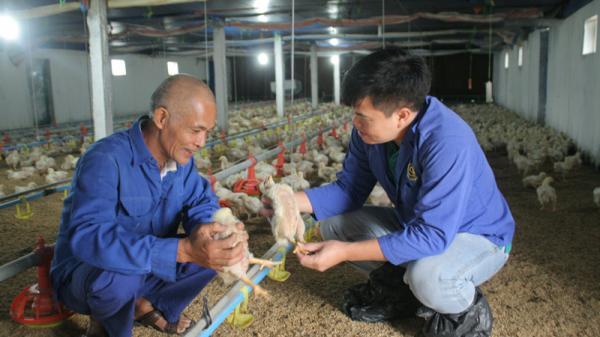 Lão nông Hòa Bình thu nhập tiền tỷ từ chăn nuôi gia công cho Công ty CP Chăn nuôi Việt Nam