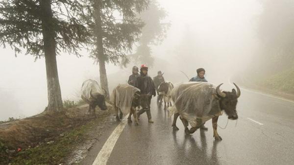 Công điện khẩn gửi UBND tỉnh Hòa Bình: Khẩn trương chống rét cho đàn vật nuôi