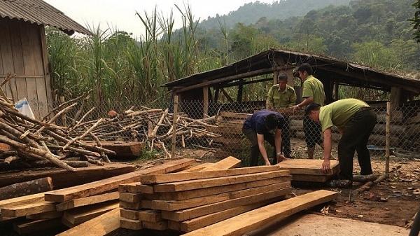 Điện Biên: Phát hiện lượng lớn gỗ trái phép trong nhà trưởng Công an xã