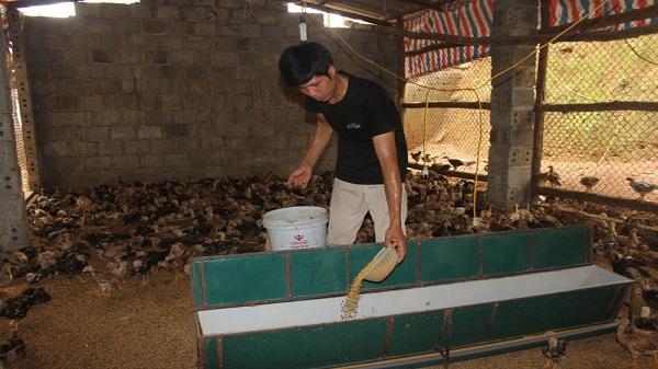 Khởi nghiệp từ 300 con gà, chàng trai đất Hòa Bình trở thành ông chủ trang trại thu nhập hàng trăm triệu mỗi năm