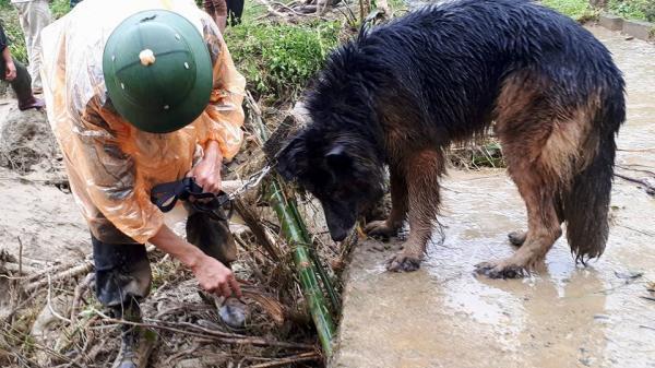 CLIP XÚC ĐỘNG: Tình đồng đội đặc biệt của một... chú chó sau sạt lở kinh hoàng ở Hòa Bình