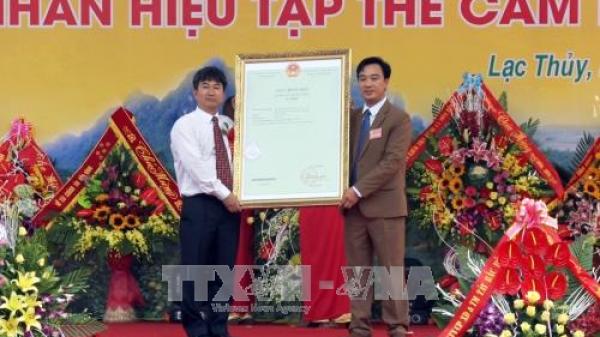 Hòa Bình: Đón nhận văn bằng bảo hộ nhãn hiệu tập thể 'Cam Lạc Thủy'