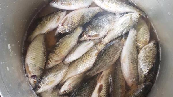 Về Huế mùa mưa ăn cá đồng!