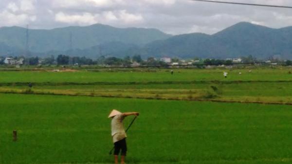 Đi dặm lúa, người phụ nữ bị sét đánh tử vong