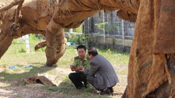 Cây quái bỏ bên đường: Cán bộ ăn lương ngồi coi cây