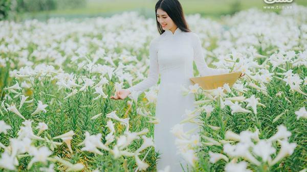 Về làng cổ Nguyệt Biều giữa xứ Huế mộng mơ ngắm hoa loa kèn ngọt ngào, tinh khôi ngày cuối mùa