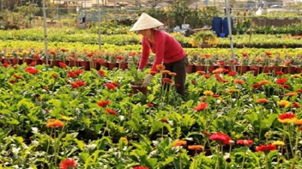 Rực rỡ màu sắc với lễ hội hoa lần thứ nhất tại làng hoa Xuân Quan – Hưng Yên