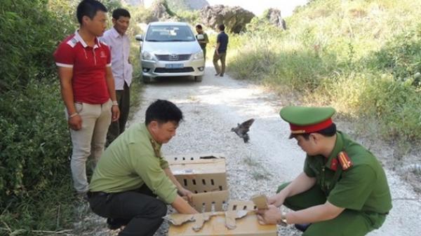 Phát hiện đối tượng ở Hưng Yên vận chuyển 320 cá thể chim ngói trái phép