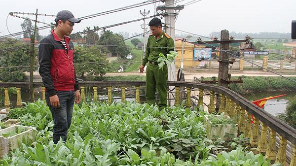 Hưng Yên: Xử lý nghiêm những trường hợp trồng cây thuốc p.hiện tại nhà
