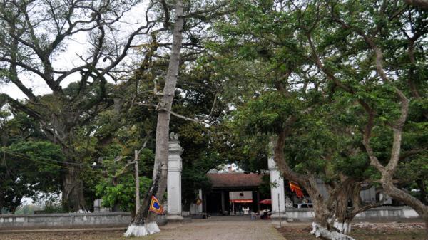Bảo tồn cây cổ thụ tại Đền Đa Hòa, Hưng Yên