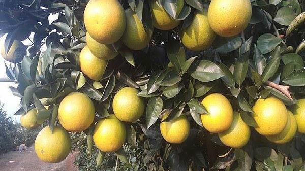 Hàng không 'chắp cánh' cho nhiều trái cây đặc sản