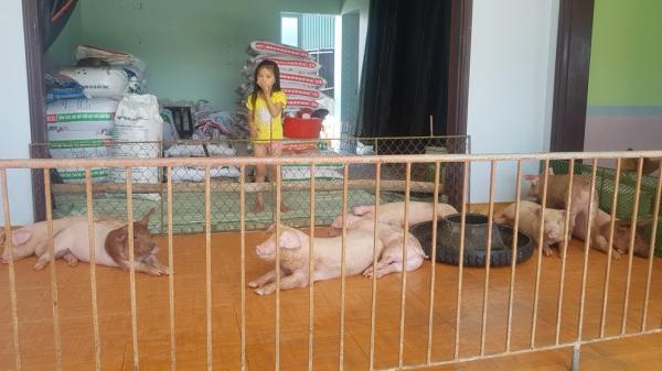 Chuyện ngược đời ở Hưng Yên: Lợn gà lên ở nhà tầng, người chui xuống nhà kho xập xệ để ở