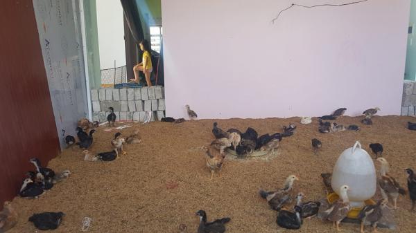 Lợn gà ở nhà tầng, người xuống kho ở Hưng Yên: Yêu cầu cảnh cáo lãnh đạo xã