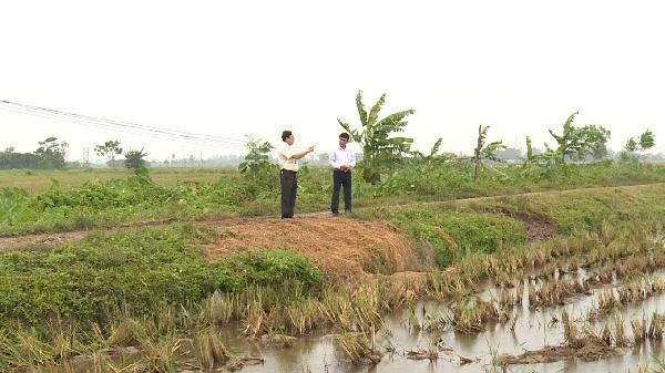 Khoái Châu (Hưng Yên): Chủ máy gặt lúa bị đòi tiền bảo kê 3 - 5 triệu đồng