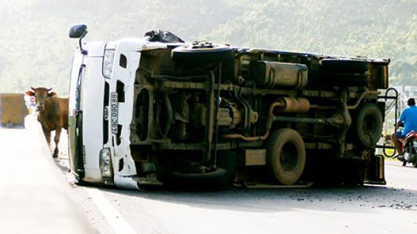 Nha Trang: Xe tải chở bò lật trên Quốc lộ 1