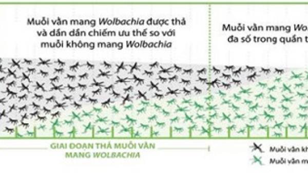 Phê duyệt kế hoạch thả muỗi mang Wolbachia tại xã Vĩnh Lương, TP. Nha Trang