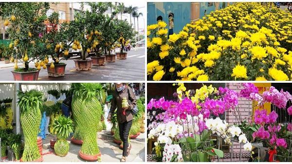 Cây kiểng Tết độc lạ đã về phố biển Nha Trang