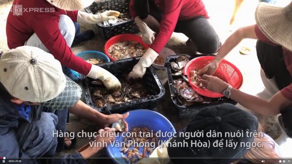 Vịnh Vân Phong- Khánh Hòa: địa điểm lý tưởng để nuôi trai lấy ngọc