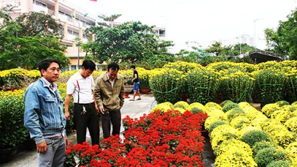 Hoa xuân về phố ngập tràn thành phố biển Nha Trang