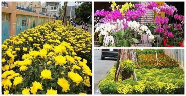 CLIP: Toàn cảnh đường phố Nha Trang ngập tràn sắc hoa những ngày giáp Tết