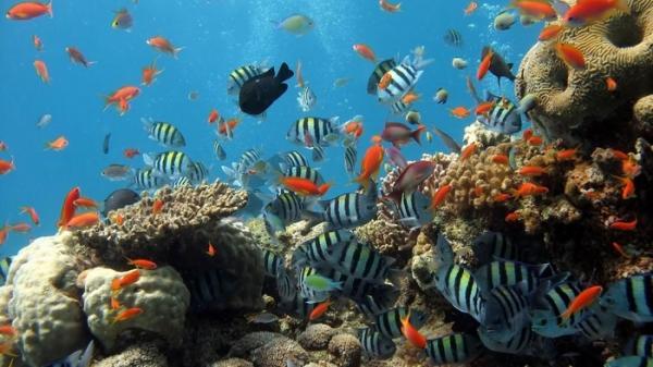 Trải nghiệm không thể bỏ qua khi tới Nha Trang: Lặnngắm san hô dưới đáy đại dương