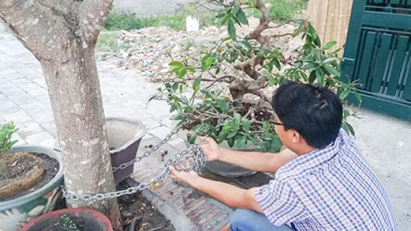 TP Nha Trang: Tái phát tình trạng trộm cắp cây cảnh