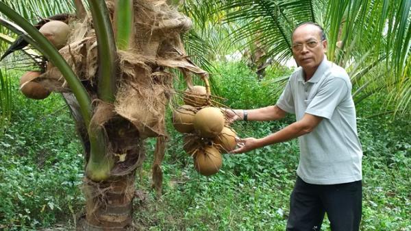 """Khánh Hòa: """"Lão nông nghiệp dư"""" lập trang trại tổng hợp thu vài tỷ đồng/năm"""