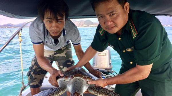 Khánh Hòa: Thả cá thể rùa biển về môi trường tự nhiên