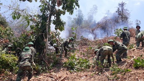 Diên Khánh: Cháy 5 ha rừng keo