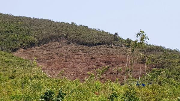 """""""Sốt"""" đất đặc khu, dân Vạn Ninh phá rừng, chiếm đảo"""
