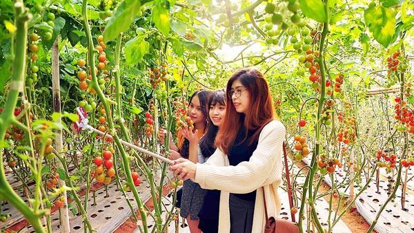 Lâm Đồng: Du lịch canh nông có thể tạo thu nhập hàng chục tỷ đồng mỗi năm