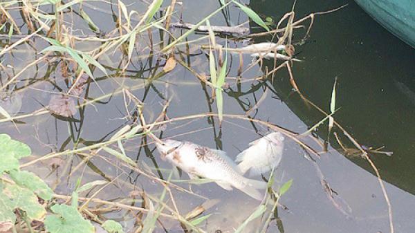 Lâm Đồng: Cá chết, nước thải bốc mùi vì ô nhiễm