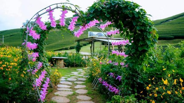 """Cách Thái Bình không xa có thung lũng hoa NÚI ĐÁ TRẮNG đẹp """"RỤNG TIM"""" đang nở rộ đón khách dịp lễ 2/9"""