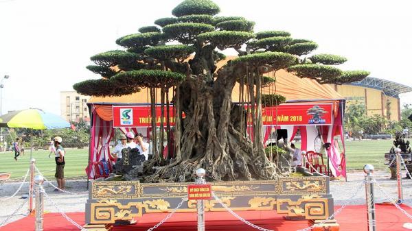 Trải thảm đỏ đón cây dát vàng 10 tỷ từng thuộc sở hữu của đại gia Thái Bình gây xôn xao khắp chốn