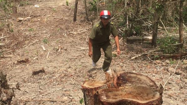 Đắk Lắk: Lâm tặc ngang nhiên mở đường trong đêm để tàn phá rừng
