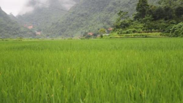 Thái Nguyên: Bất ngờ hoá kiếp ruộng đồng cho đại gia vàng đào mỏ