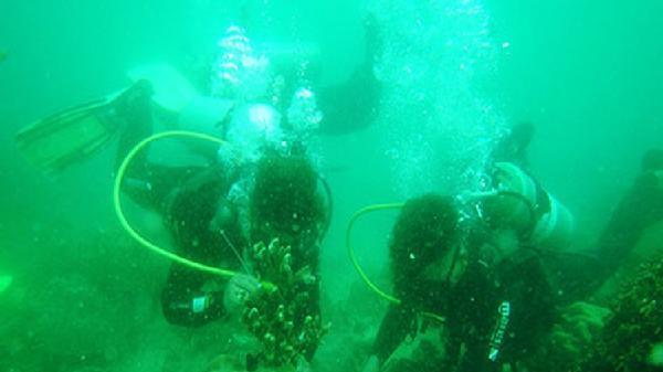 Khánh Hòa: Phục hồi, tái tạo rạn san hô phục vụ du lịch sinh thái biển