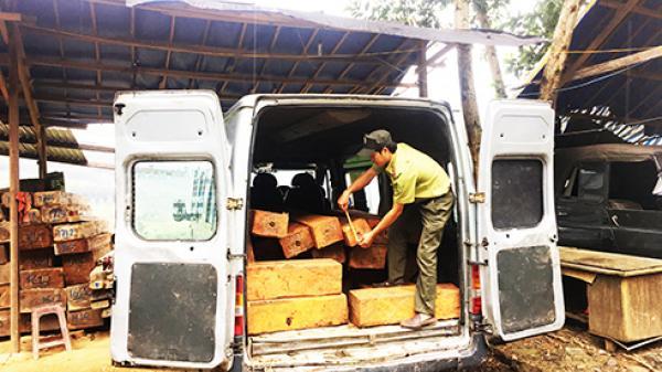Khánh Vĩnh: Gia tăng tình trạng dùng ô tô khách vận chuyển gỗ lậu