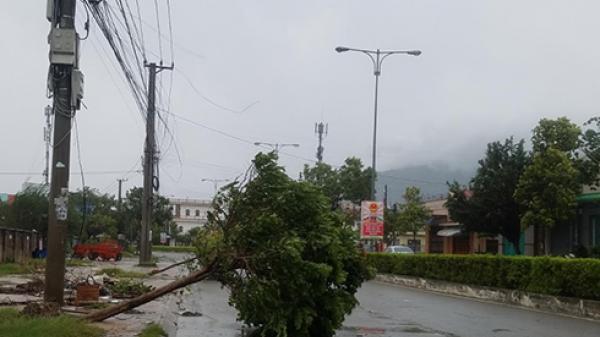 TP. Cam Ranh: Gió giật mạnh, cây gãy đổ nhiều nơi