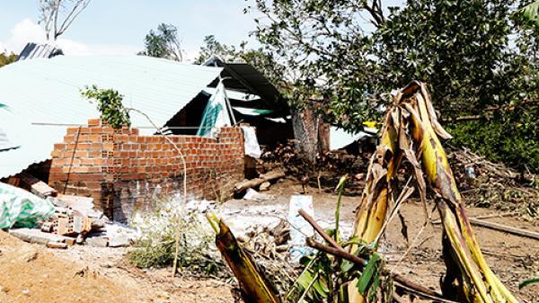 Nông nghiệp thiệt hại hơn 4.800 tỷ đồng