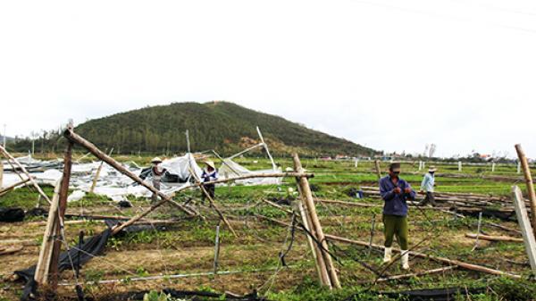 Xã Ninh Đông: Tích cực khôi phục vùng rau