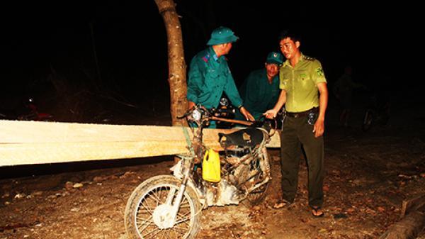 Vạn Ninh: Bùng phát khai thác gỗ trái phép