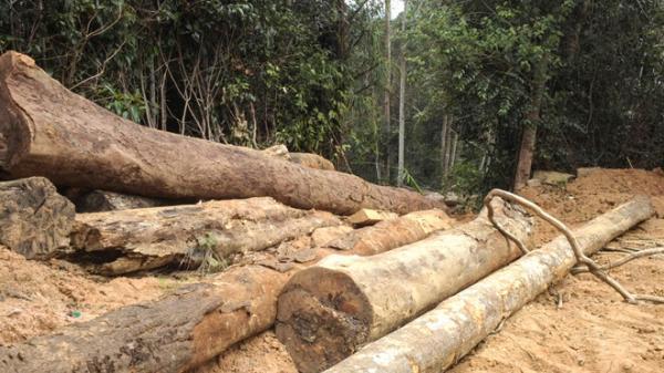 Rừng phòng hộ ở Khánh Hòa đang bị tàn phá