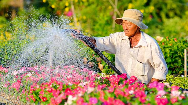 Có một tuyệt tác nghệ thuật của thầy giáo Miền Tây mang mùa xuân rạo rực nơi làng hoa Sa Đéc
