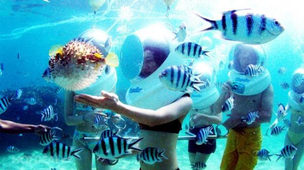 Đến Phú Quốc trải nghiệm tour đi bộ dưới biển ngắm san hô độc đáo