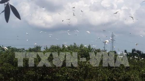 Du lịch sinh thái vườn cò hấp dẫn du khách ở Kiên Giang