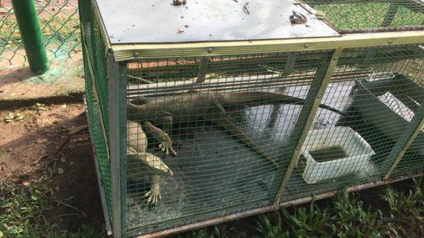 Kiên Giang: Phát hiện 44 động vật quý hiếm bị nuôi nhốt trái phép