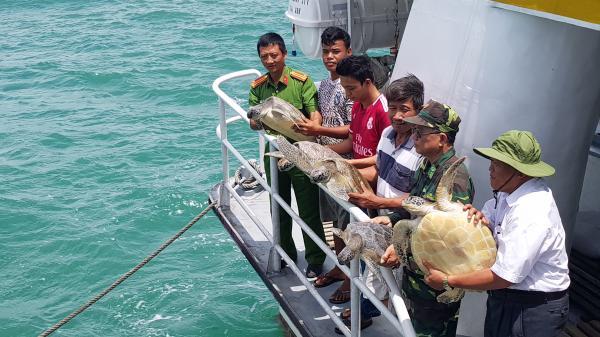 Kiên Giang: Thả 5 cá thể rùa biển về môi trường tự nhiên